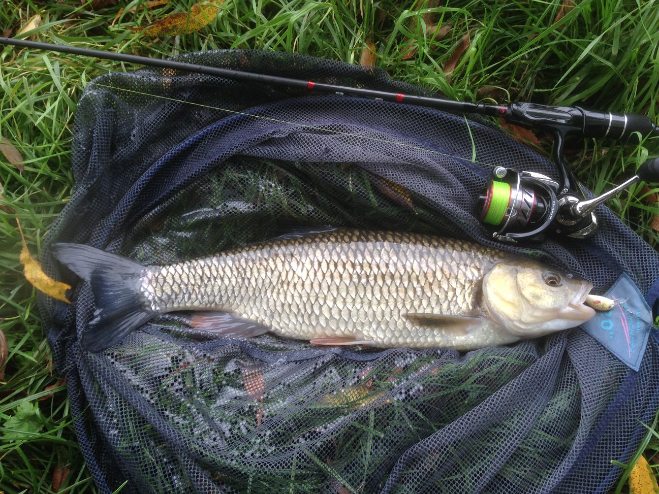 From 28, caught on lure you can still see in its mouth...